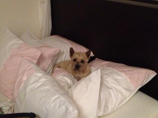 Queen of the pillows